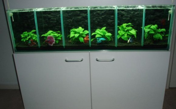 1+ images about betta idea