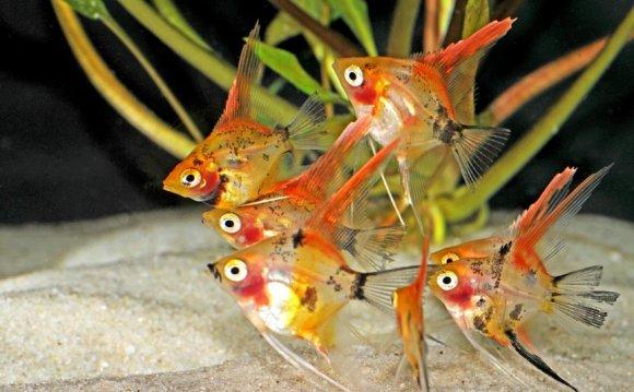 1+ images about Aquariums