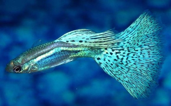 1+ images about Fish on