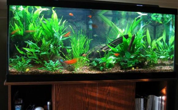 1+ images about fish tanks