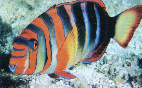 1+ images about Exotic Fish