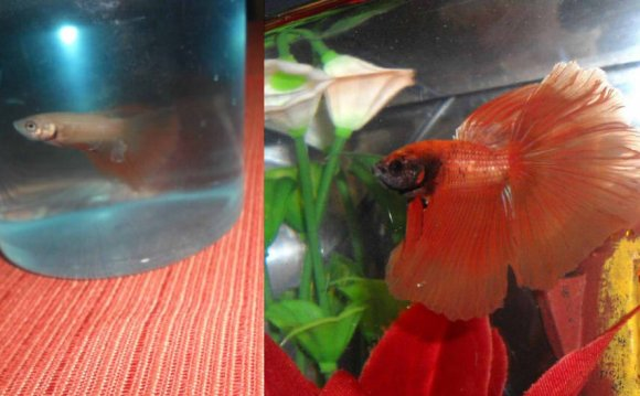 1+ images about Betta! on