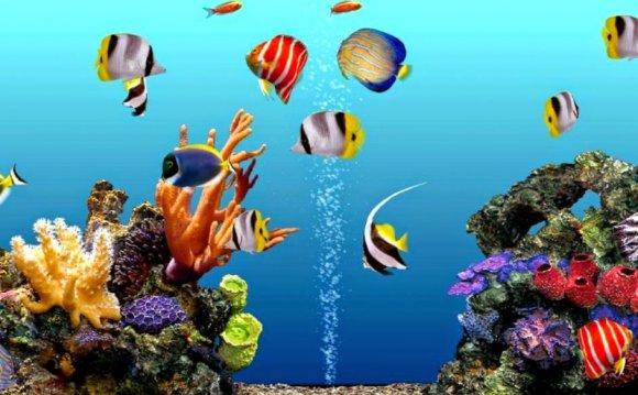 Aquarium Screensavers For