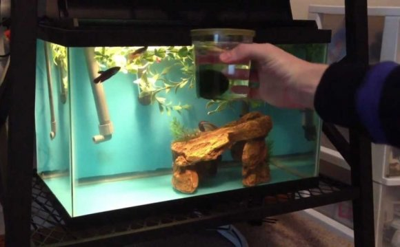 Awesome Betta Fish Tanks With
