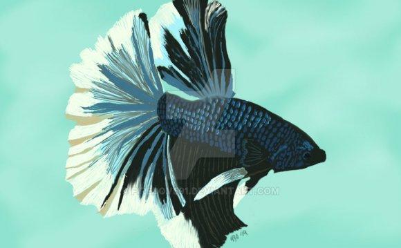 Halfmoon Betta Fish by