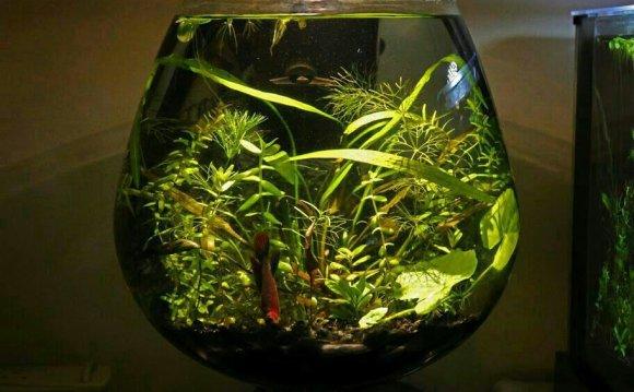 Buy Betta Fish Setup Bowl