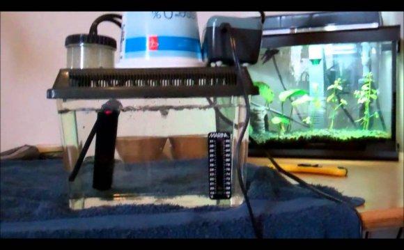 Betta Fish Hospital tank