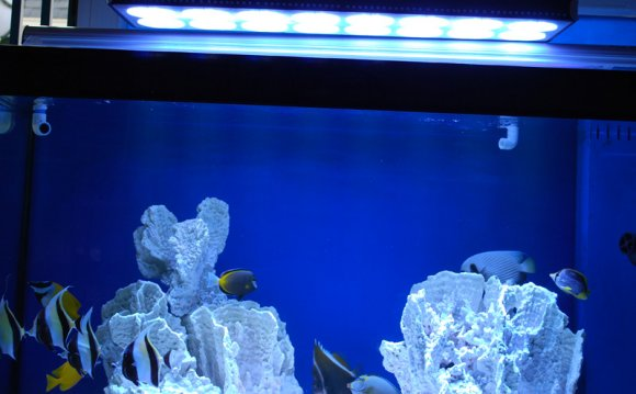 Pin China 600w Cool Led Fish