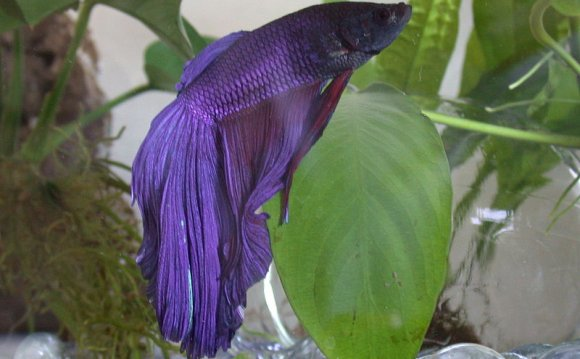 Betta Fish Supplies List |