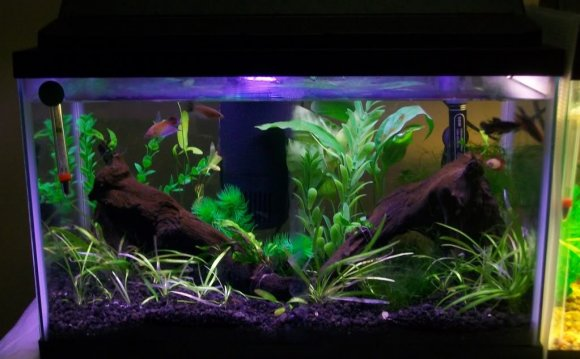 Betta fish tank, Plants