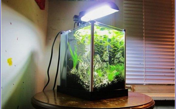 Betta Fish Tanks On Wall