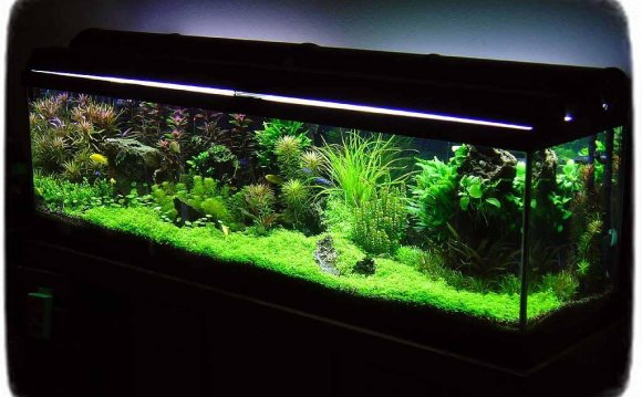 Betta Fish Tanks With Live