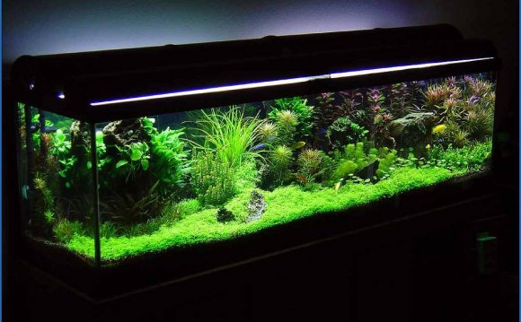 Betta Fish Tanks With Live