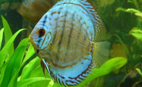 Cultivating a Healthy Discus