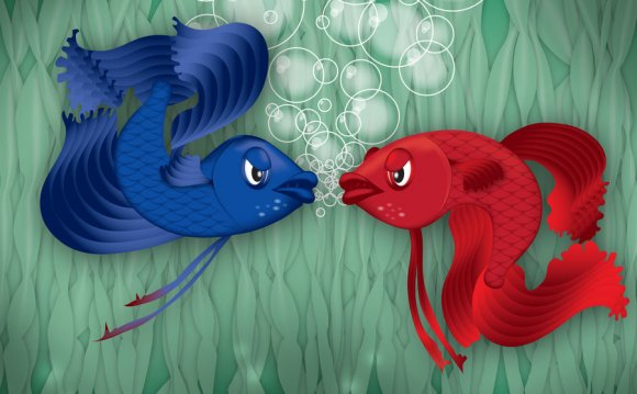 Fighting Fish by P-T-1