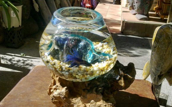 Glass Fish Bowl on Driftwood