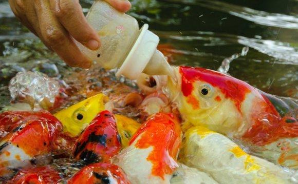 Fish Care - Humber Nurseries