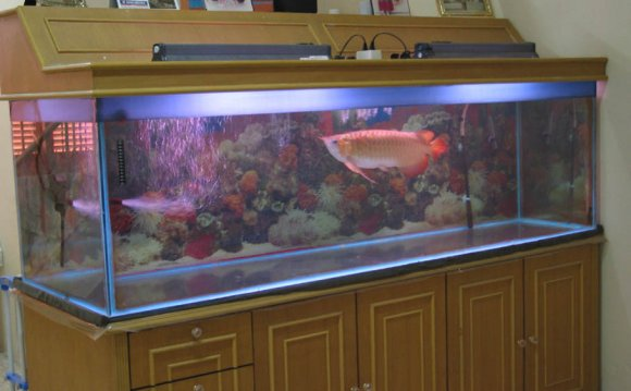 Fish tank maintenance 80 cm