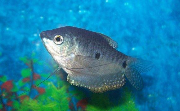 Fish tank maintenance tips