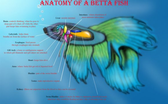 Of-a-Betta-Fish-183230627