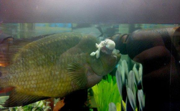 Injured-Fish-at-Petco