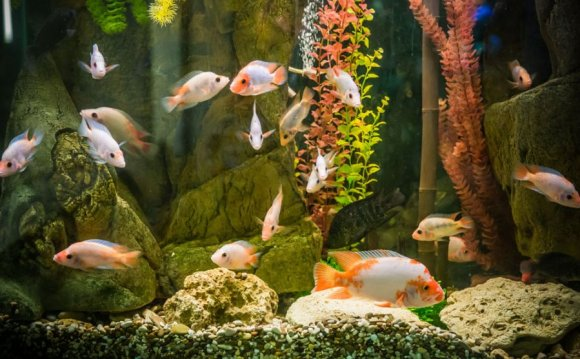 Information About Fish For