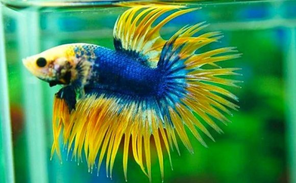Fish WallPapers Free Download