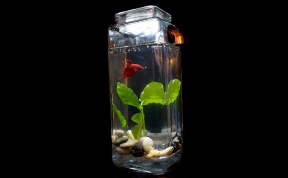 Noclean Aquarium Betta Fish