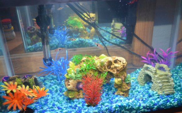 We bought some new fish