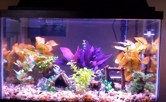 Plants and Cool fish tanks