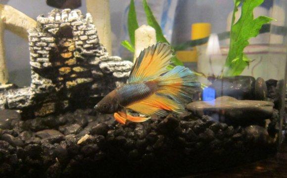 My tiny little pet store fish
