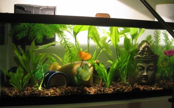 This 20 gallon long is the