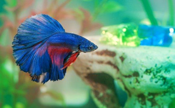 Top 5 Best Betta Fish Tanks in