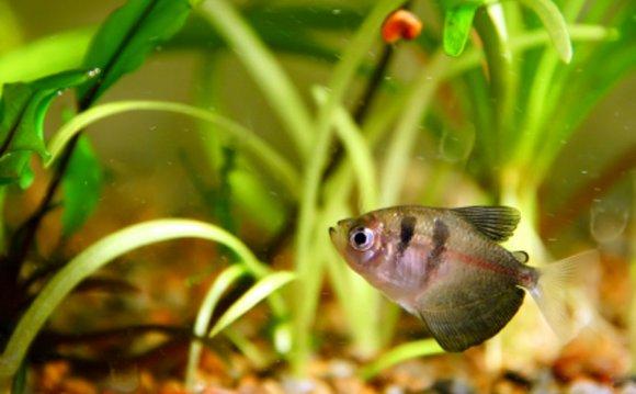 Treating sick aquarium fish