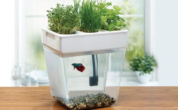 Betta fish bowl with plant
