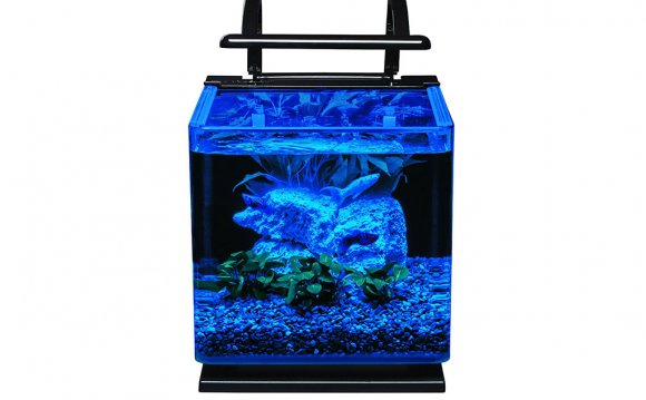 Betta fish water care