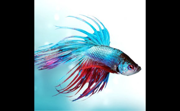 How to change Betta fish water?