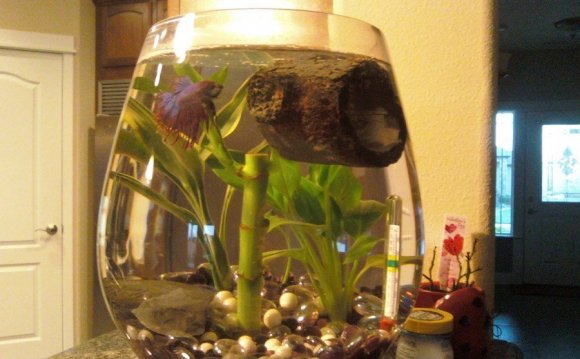 How to make my Betta fish happy?