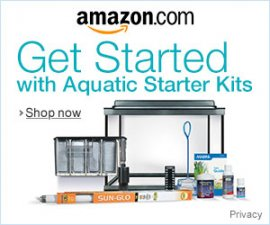 Betta fish tank starter kit