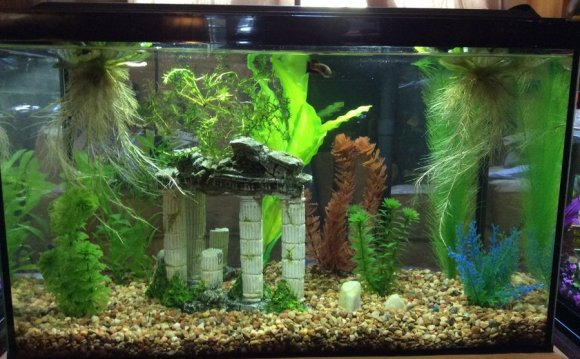 Betta tank Decor