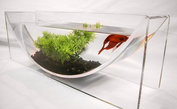 Betta fish bowl Setup