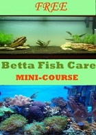 FREE Betta Fish Care Mini Course