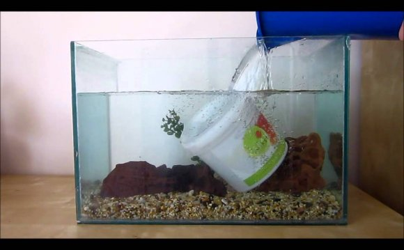 How to set up a Betta fish tank?