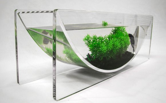 Cute Betta fish bowl