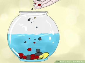 Image titled Clean a Betta Fish Bowl Step 19