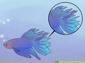 Image titled Cure Betta Fish Diseases Step 1