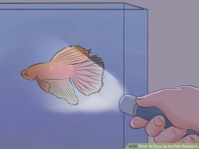 Image titled Cure Betta Fish Diseases Step 6