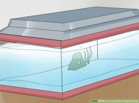 Image titled Look After Tropical Fish Step 5