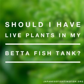 live-plants-with-betta-fish