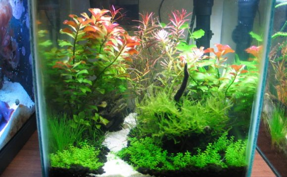 Fish Tanks for Bettas